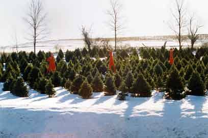 Hahn Farm | Christmas Trees